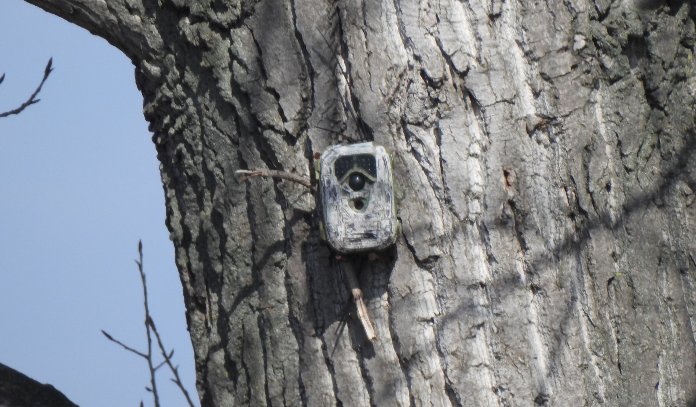 Illustration image of the Monitoring project actions - photo trap installed on the tree to monitor the birds nearby